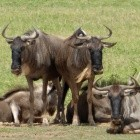 GNU Shell: Bash 5.0 ist verfügbar