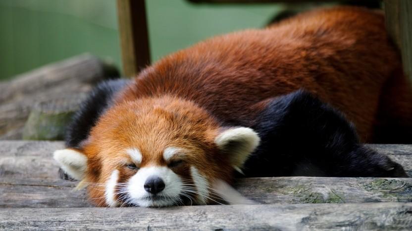 Mit dem Ausschluss von Flash in Firefox lässt sich Mozilla noch Zeit und orientiert sich an Adobe.