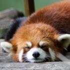 Mozilla: Firefox will Flash-Player ab Herbst 2019 deaktivieren