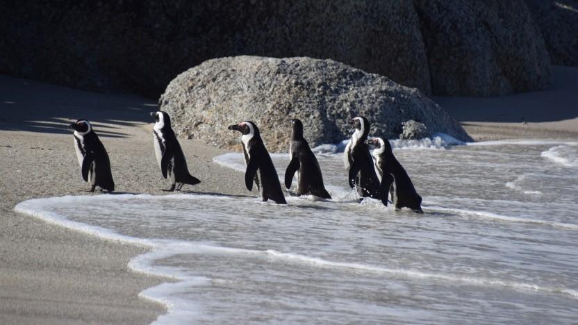 Der Linux-Kernel könnte bald neue Protokolle für die IoT-Kommunikation unterstützen.