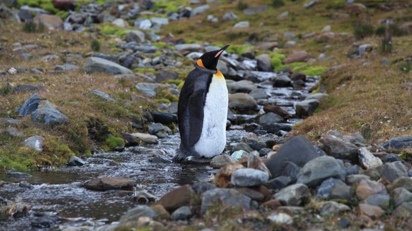 Linux erhält einen experimentellen Treiber für APFS.