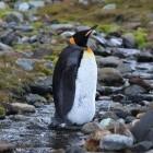 Linux: Kernel-Modul für APFS-Zugriff entsteht