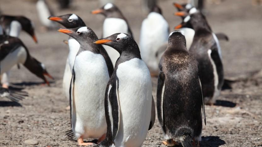 Die Linux-Community möchte Treiber für KI-Beschleuniger aufnehmen. Über das Vorgehen herrscht aber keine Einigkeit.