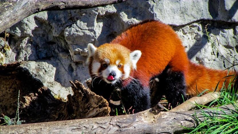 Firefox 65 erhält erneut Verbesserungen am Trackingschutz.