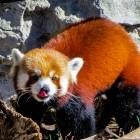 Mozilla: Firefox verbessert Trackerschutz und bringt WebP und AV1
