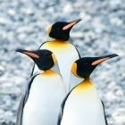Linux: Container-Distro Alpine wechselt von Libre- zu OpenSSL