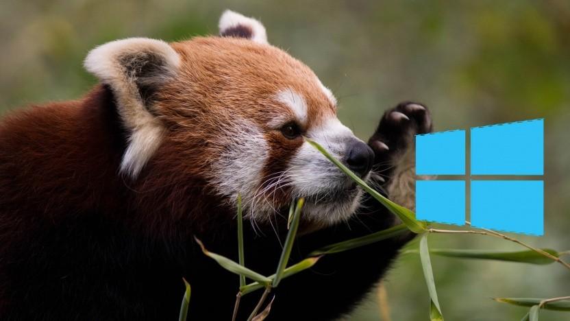 Der rote Panda, das Maskottchen von Firefox, mag Windows momentan nicht.