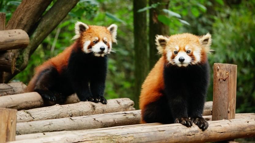 Mozilla will die Prozesse im Firefox in ihre kleinsten Bestandteile aufspalten.