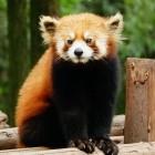 Mozilla: Firefox bekommt strikte Seitenisolierung wie Chrome