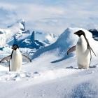 Lima-Projekt: Linux-Treiber für alte Mali-GPUs soll eingepflegt werden