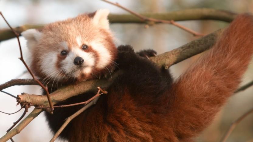 Bei der Entwicklung des Firefox will Mozilla künftig auf die Hilfe von Machine Learning setzen.
