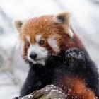 Mozilla: Firefox soll Bild-in-Bild-Modus bekommen