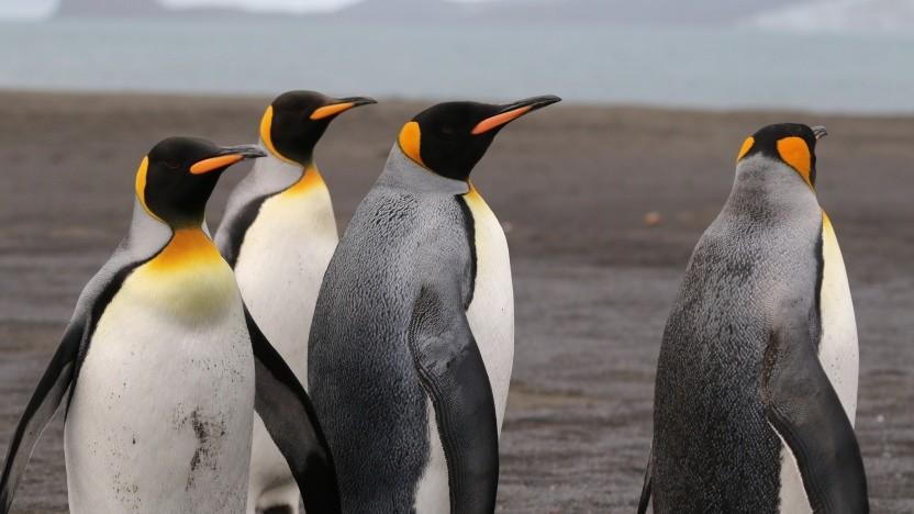 Die Debian-Entwickler suchen nach einem Fehler in ihrem Linux-Kernel für ARM-Geräte.