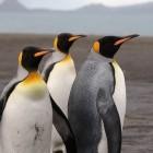 Linux: Debian-Update verhindert Start auf ARM-Geräten