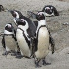 Linux: Kernel-Community hat Probleme mit Bug-Fixes
