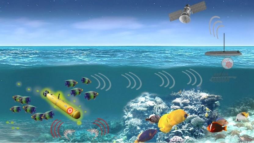 Darpa-Projekt Pals: Ozeane sollen dauerhaft von Meeresbewohnern überwacht werden.