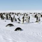 Linux Foundation: Elisa bringt Linux in sicherheitskritische Bereiche