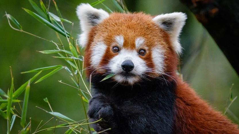 Mozilla will mit Scroll, Verlagen und Firefox-Nutzern nach Alternativen für Werbung suchen.