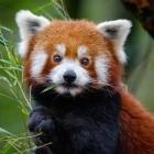 Scroll: Mozilla unterstützt Flatrate-News-App