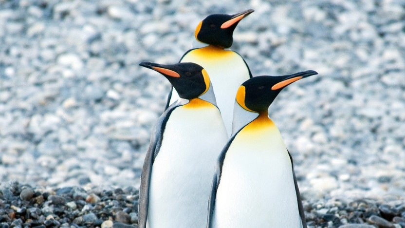 Die Linux-Community zeigt erstmals den Kernel-Treiber für Panfrost.