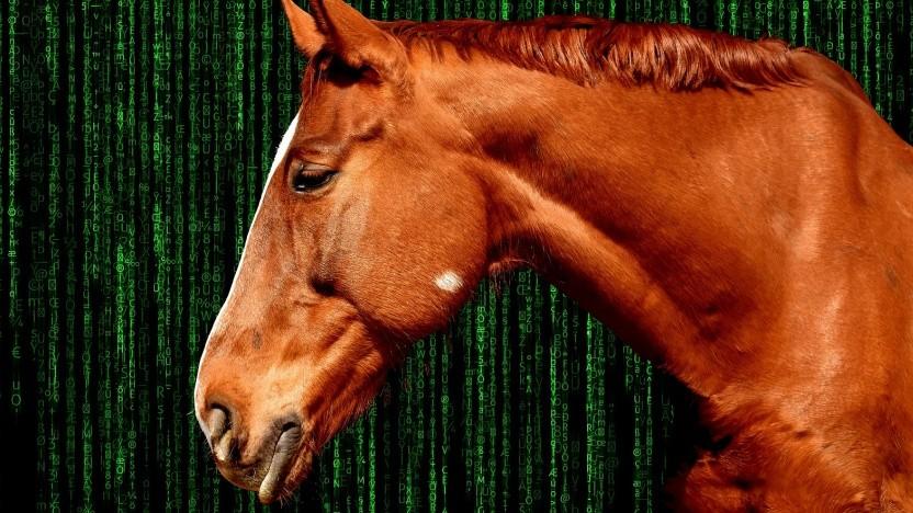 Die Forscher bringen den Vergleich zum Pferd Clever Hans. (Symbolbild)