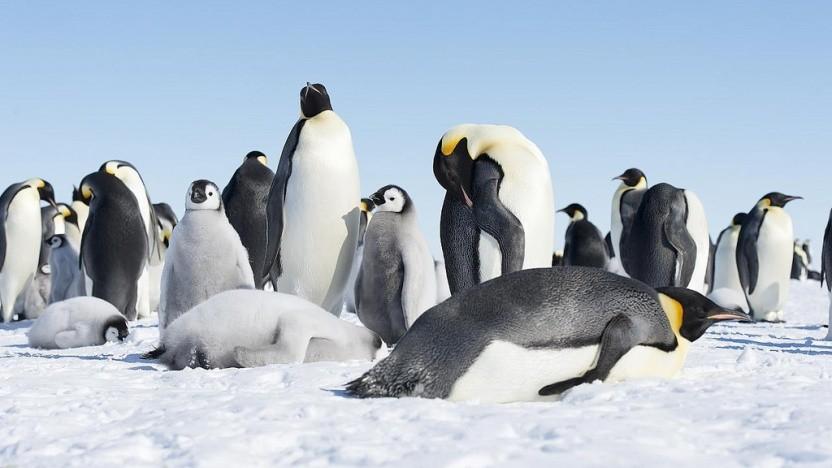 Die Linux-Grafiktreiber aus der Mesa-Bibliothek stehen in Version 19.0 bereit.