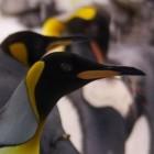 Betriebssysteme: Linux 5.1 optimiert asynchrone Zugriffe