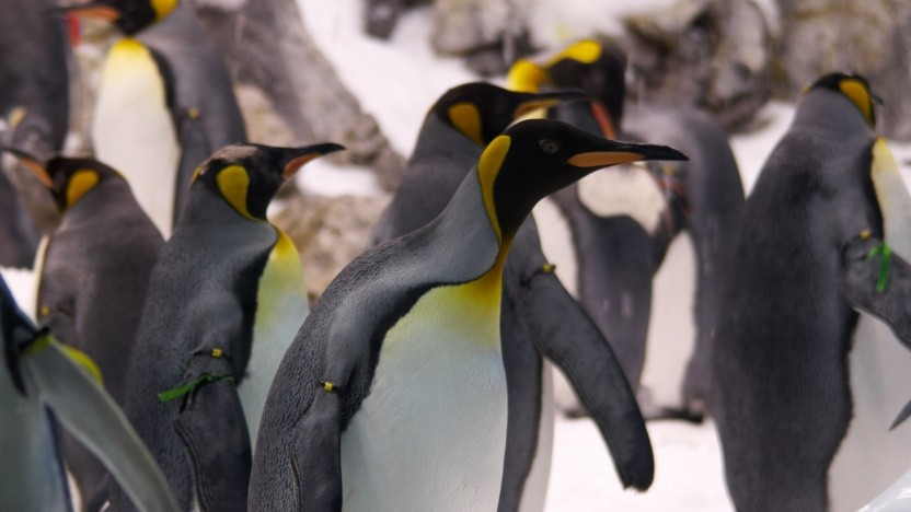 Betriebssysteme: Linux 5.1 verbessert Live-Patching