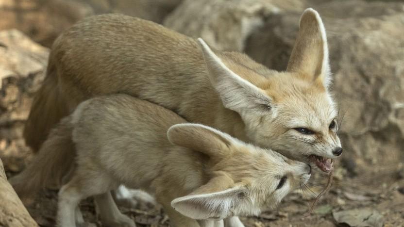 Firefox 66 macht mit plötzlichem Sound Schluss. (Symbolbild)