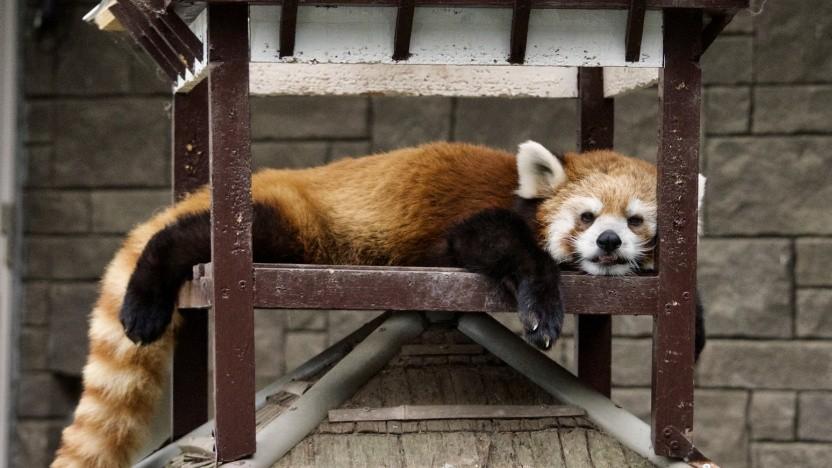 Der Firefox-Browser nutzt künftig unter bestimmte Umständen vielleicht den Windows-Root-Store für Zertifikate.