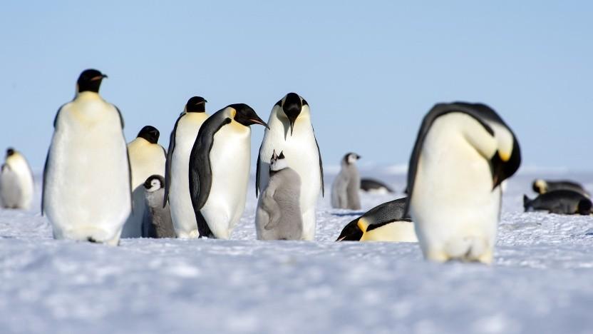 Die Linux Foundation ist künftig für das LVFS verantwortlich.