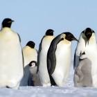 LVFS: Linux-Firmware-Projekt wandert zur Linux Foundation
