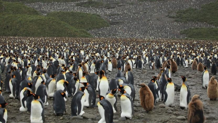 Linux-Entwickler haben es künftig wohl noch schwerer, ihre Rechte allein durchzusetzen.