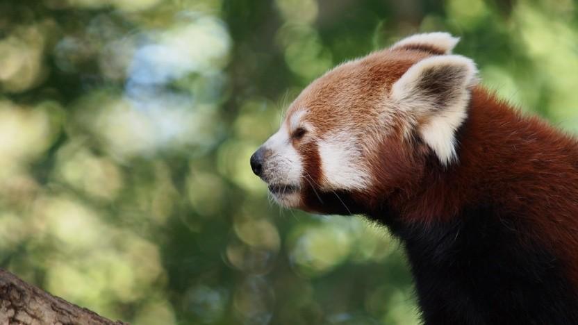 Firefox erweitert seinen Trackingschutz erneut.