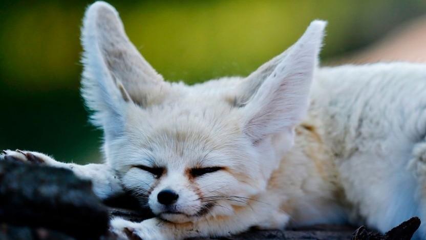 Der etwas andere Firefox-Browser ist als Beta fertig.