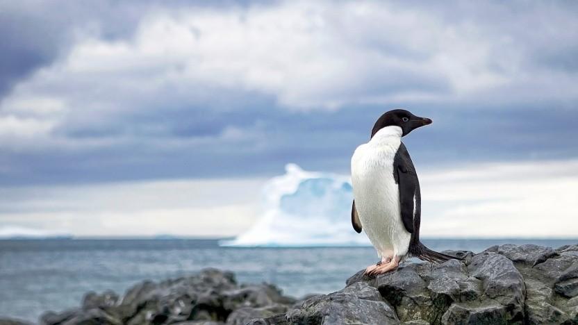 Die Arbeiten an Scientific Linux werden beendet. Künftig wird CentOS eingesetzt.