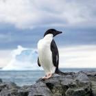 RHEL-Klon: Fermilab stellt Scientific Linux ein