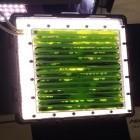 Lebenserhaltungssystem: DLR schickt einen Photobioreaktor mit Algen zur ISS
