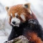 Browser: Abgelaufenes Zertifikat deaktiviert Firefox-Addons