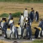 Microsoft: Windows bekommt einen Linux-Kernel für WSL 2