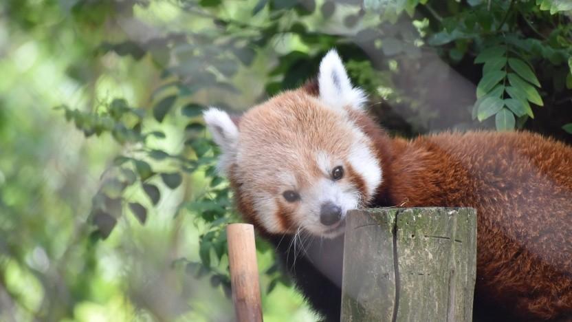 Die Firefox-Macher wollen den Vorfall der deaktivierten Addons weiter analysieren.