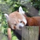 Firefox-Browser: Mozilla will nach Addon-Deaktivierung Abläufe ändern