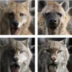Nvidia: Petswap wandelt Labradore in Hyänen und Eisbären um