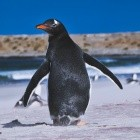 Kroah-Hartman: Linux 3.18 wandert von der Kernel-Community zu Android