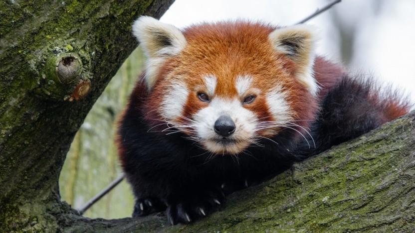Der Firefox 67 bringt Leistungssteigerungen.