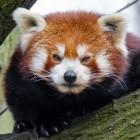 Mozilla: Firefox 67 ist schneller und reaktionsfreudiger