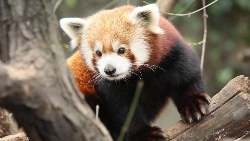 Der Firefox blockiert nun standardmäßig Third-Party-Tracker.