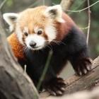 Browser: Mozilla startet das Blocken von Tracking-Cookies im Firefox