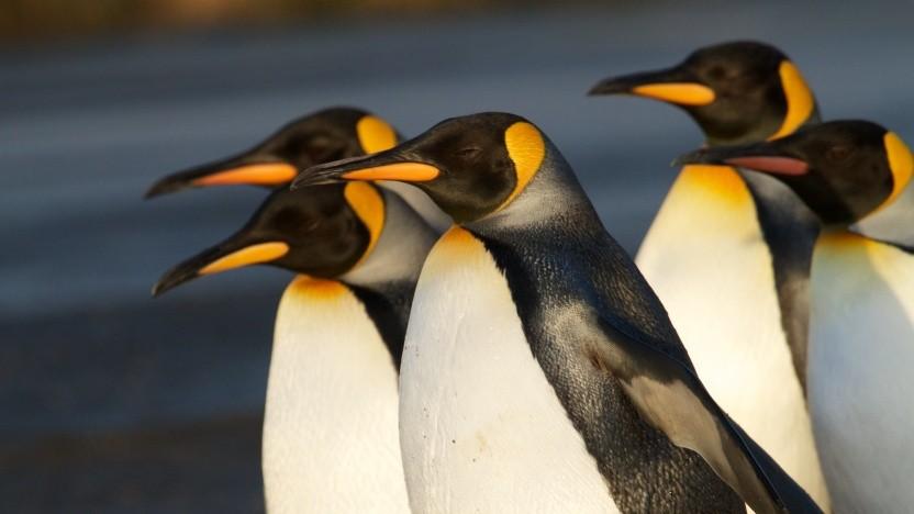 Die Entwicklung der Linux-Treiber für Mali-GPUs wird professioneller.