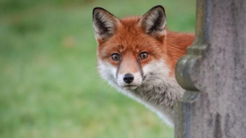 Firefox bekommt Premium Services. (Symbolbild)